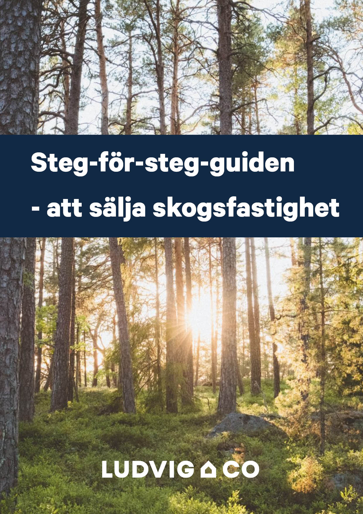 Guide _ Salja skog