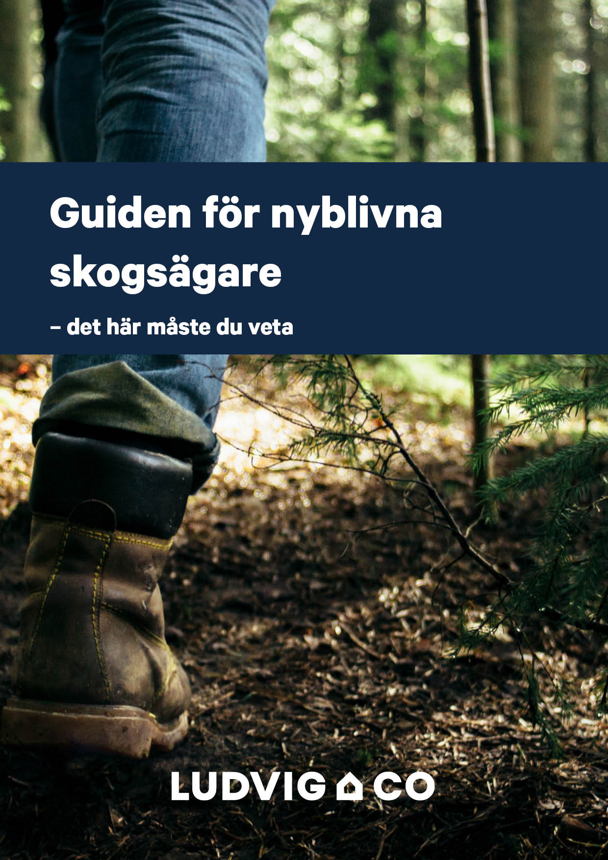 Guiden for nyblivna skogsagare