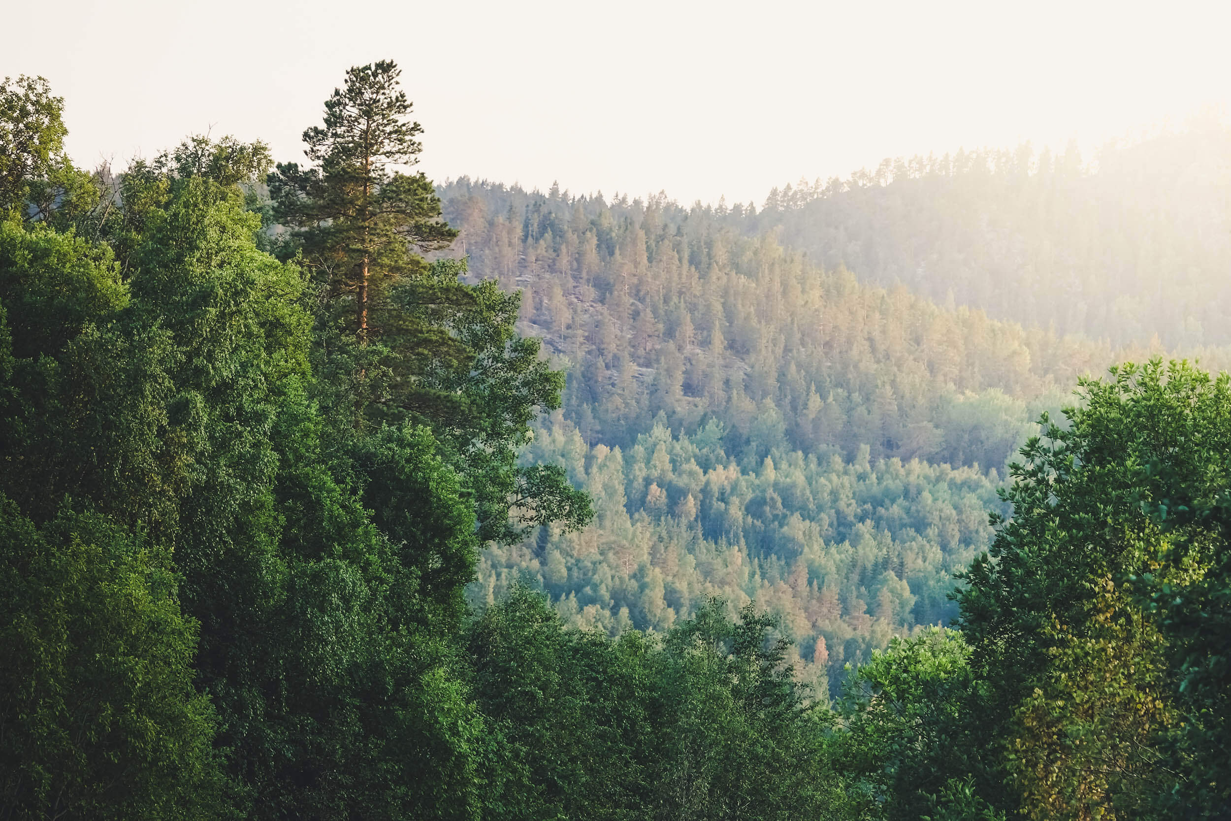 Skogsmarkspriser_2020