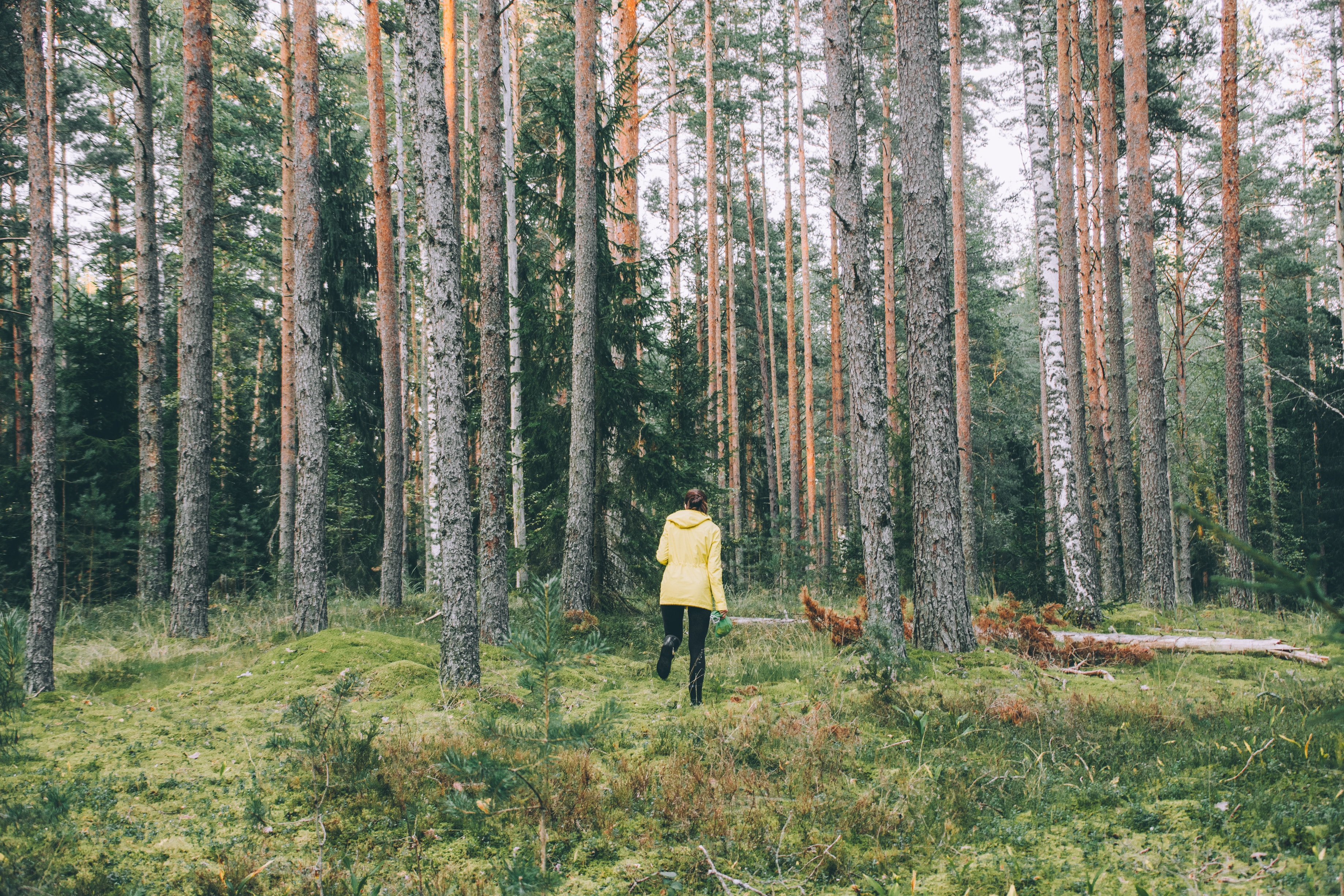 Vill du sälja skog - här är våra bästa råd